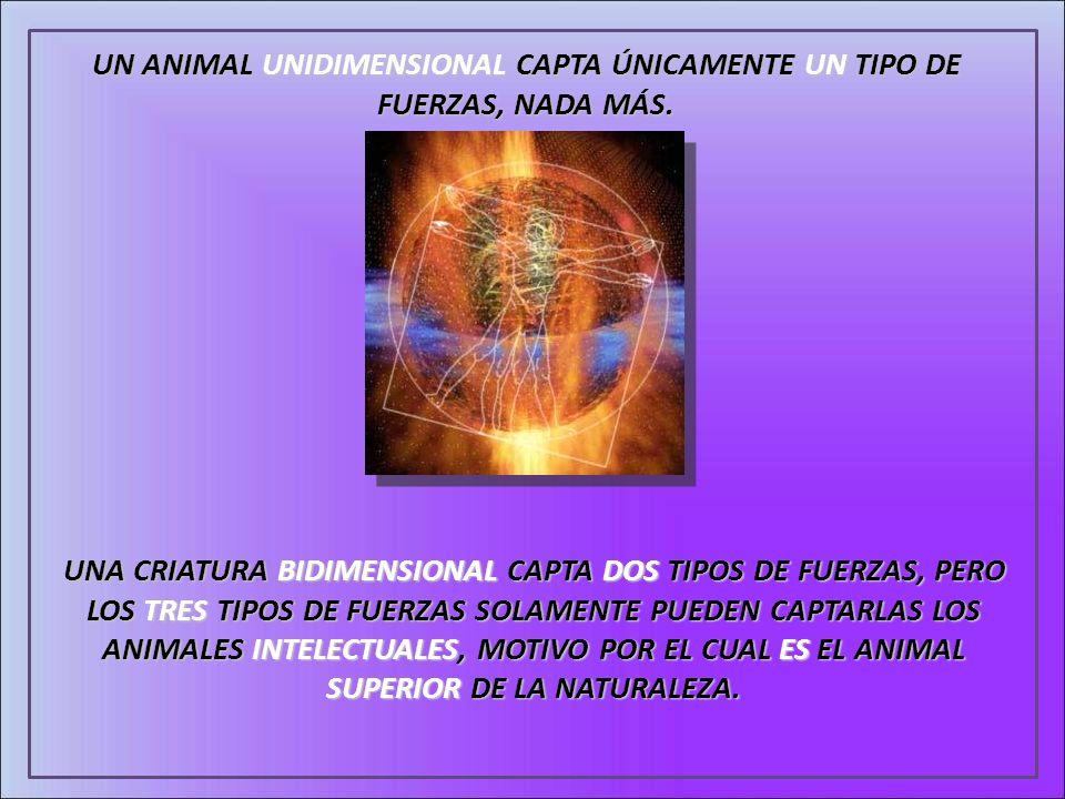 UN ANIMAL UNIDIMENSIONAL CAPTA ÚNICAMENTE UN TIPO DE FUERZAS, NADA MÁS. UNA CRIATURA BIDIMENSIONAL CAPTA DOS TIPOS DE FUERZAS, PERO LOS TRES TIPOS DE