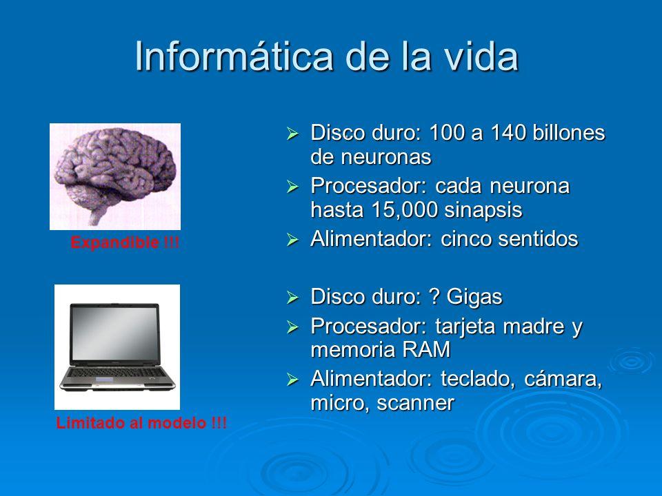 Informática de la vida. Disco duro: 100 a 140 billones de neuronas Disco duro: 100 a 140 billones de neuronas Procesador: cada neurona hasta 15,000 si