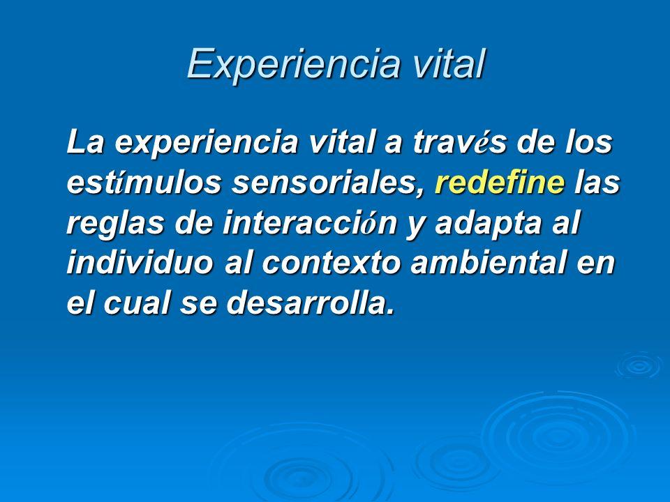 Experiencia vital La experiencia vital a trav é s de los est í mulos sensoriales, redefine las reglas de interacci ó n y adapta al individuo al contex