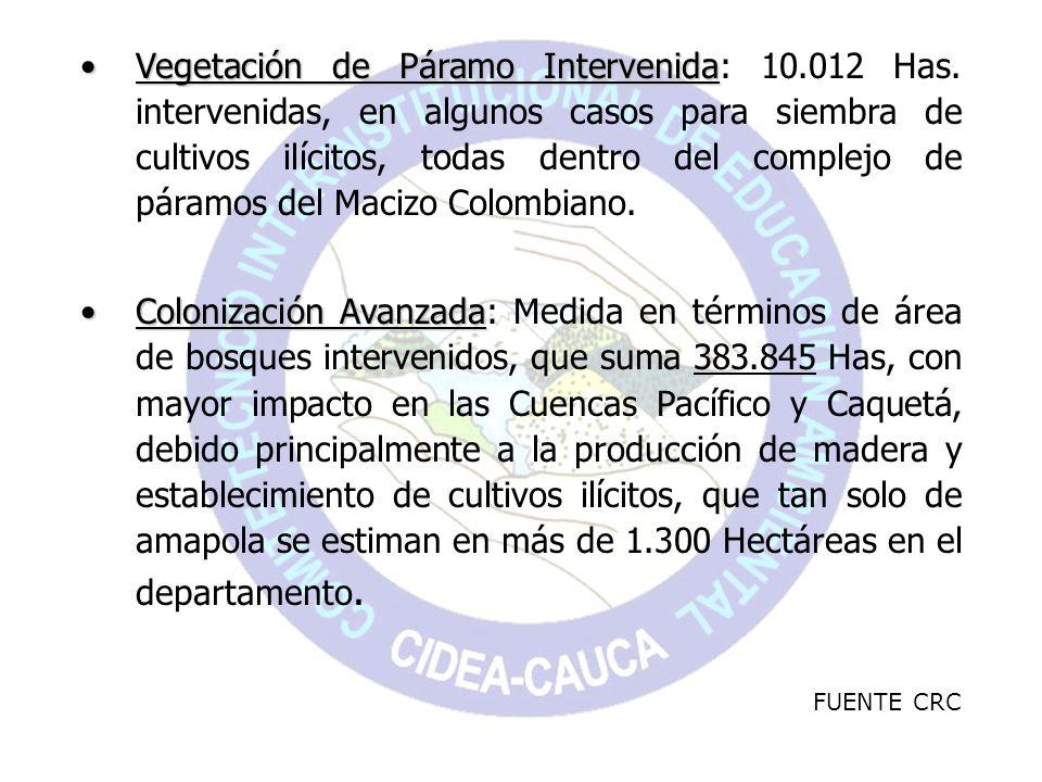 Vegetación de Páramo IntervenidaVegetación de Páramo Intervenida: 10.012 Has. intervenidas, en algunos casos para siembra de cultivos ilícitos, todas