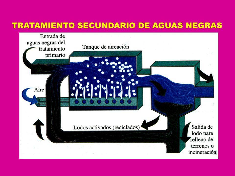 TRATAMIENTO SECUNDARIO DE AGUAS NEGRAS