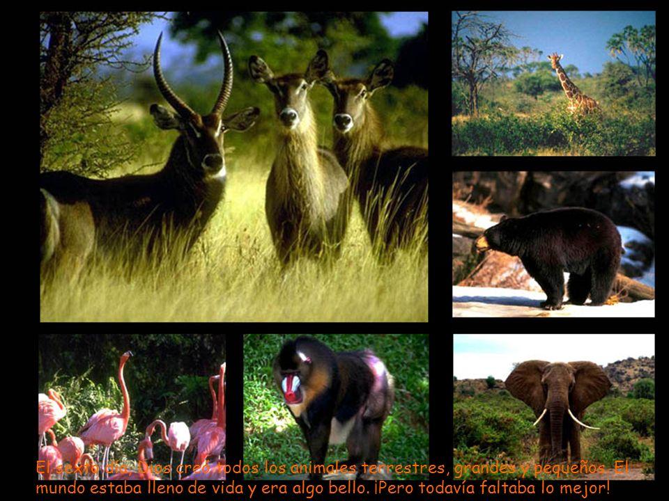 El sexto día, Dios creó todos los animales terrestres, grandes y pequeños. El mundo estaba lleno de vida y era algo bello. ¡Pero todavía faltaba lo me