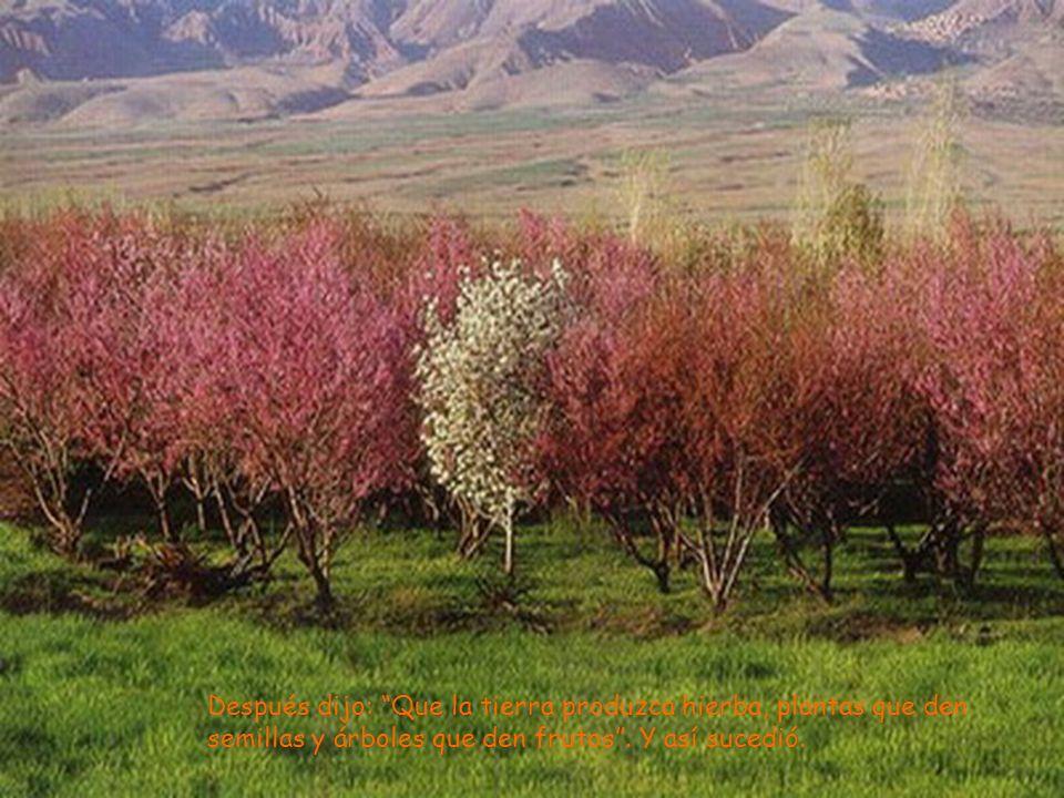 Después dijo: Que la tierra produzca hierba, plantas que den semillas y árboles que den frutos. Y así sucedió.