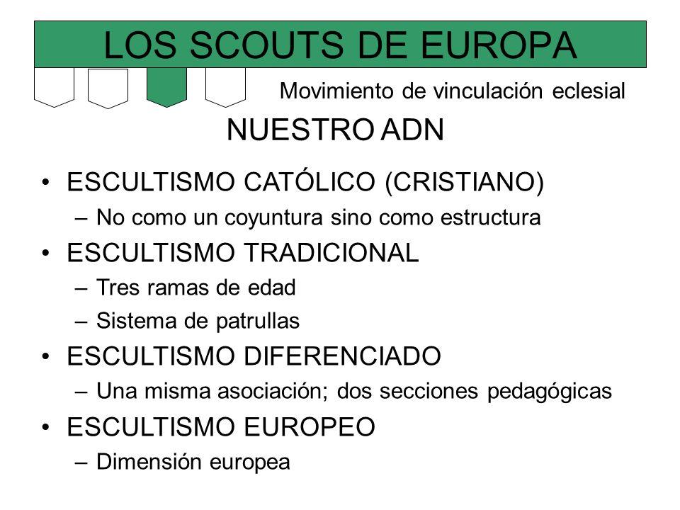 LOS SCOUTS DE EUROPA NUESTRO ADN ESCULTISMO CATÓLICO (CRISTIANO) –No como un coyuntura sino como estructura ESCULTISMO TRADICIONAL –Tres ramas de edad