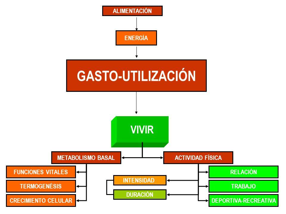 ALIMENTACIÓN DEPORTIVA-RECREATIVACRECIMIENTO CELULAR FUNCIONES VITALES TERMOGENÉSIS METABOLISMO BASALACTIVIDAD FÍSICA TRABAJO RELACIÓN VIVIR GASTO-UTI