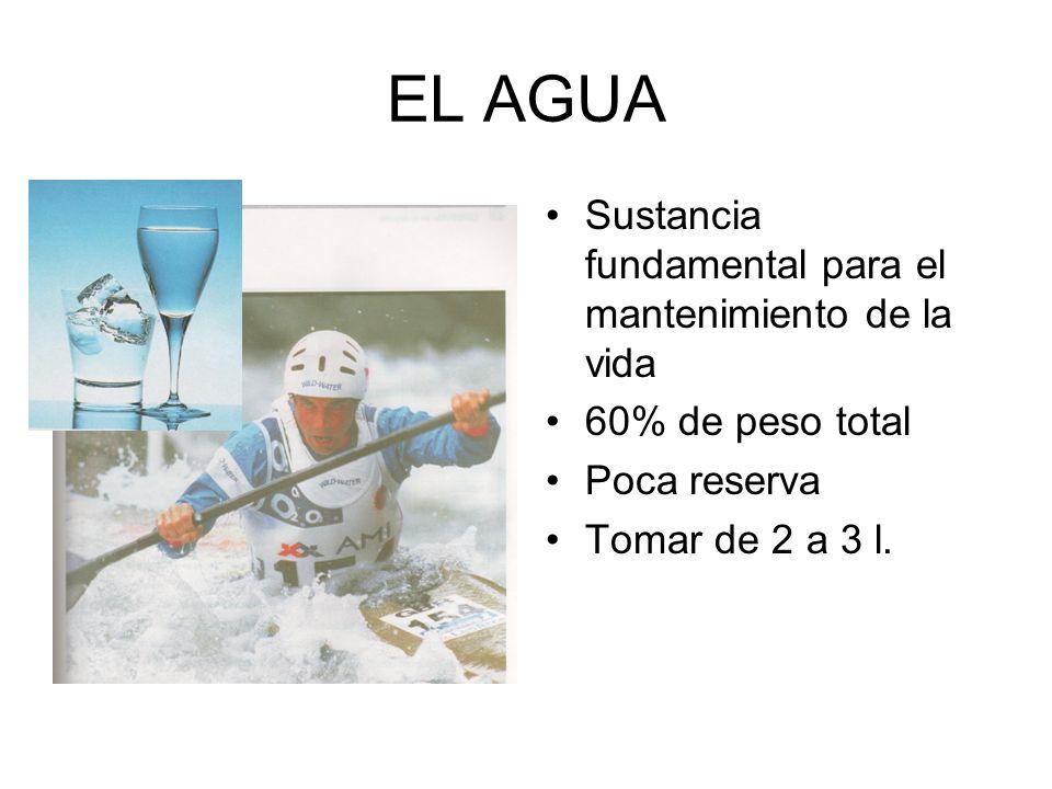 EL AGUA Sustancia fundamental para el mantenimiento de la vida 60% de peso total Poca reserva Tomar de 2 a 3 l.