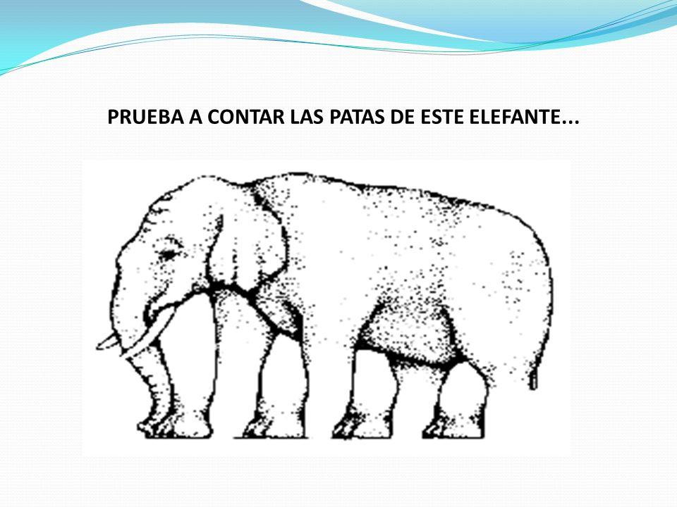 PRUEBA A CONTAR LAS PATAS DE ESTE ELEFANTE...