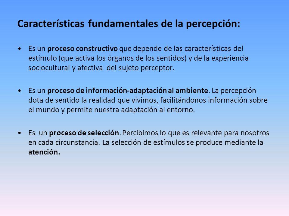 Características fundamentales de la percepción: Es un proceso constructivo que depende de las características del estímulo (que activa los órganos de