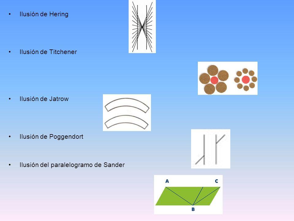 Ilusión de Hering Ilusión de Titchener Ilusión de Jatrow Ilusión de Poggendort Ilusión del paralelogramo de Sander