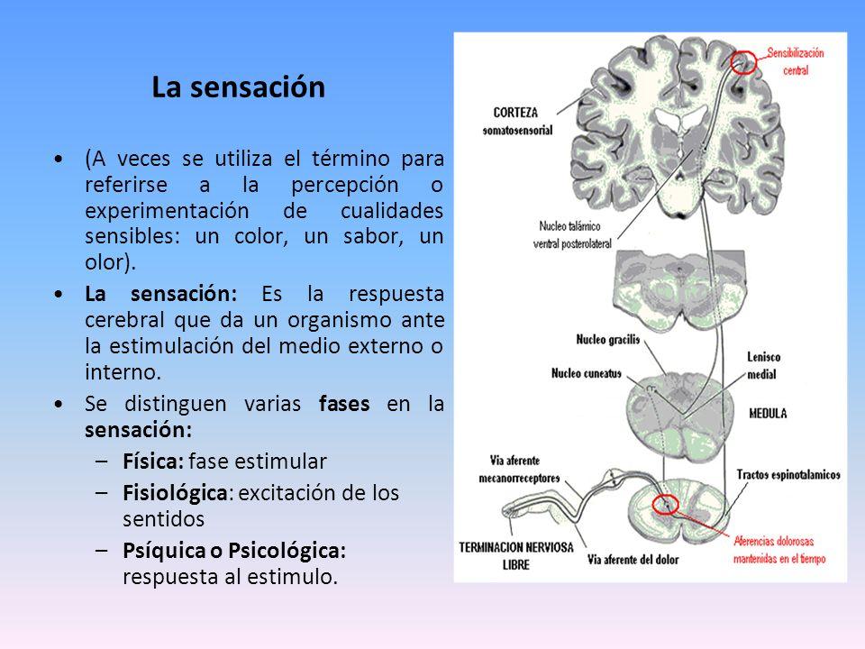 La sensación (A veces se utiliza el término para referirse a la percepción o experimentación de cualidades sensibles: un color, un sabor, un olor). La