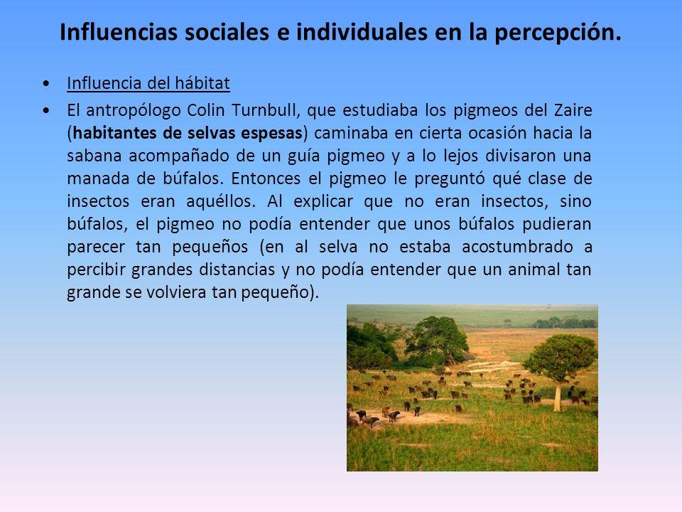 Influencias sociales e individuales en la percepción. Influencia del hábitat El antropólogo Colin Turnbull, que estudiaba los pigmeos del Zaire (habit