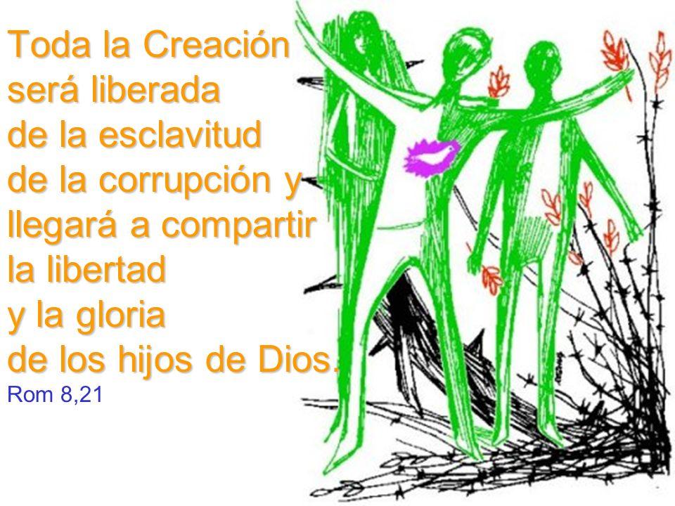 Toda la Creación será liberada de la esclavitud de la corrupción y llegará a compartir la libertad y la gloria de los hijos de Dios. Rom 8,21