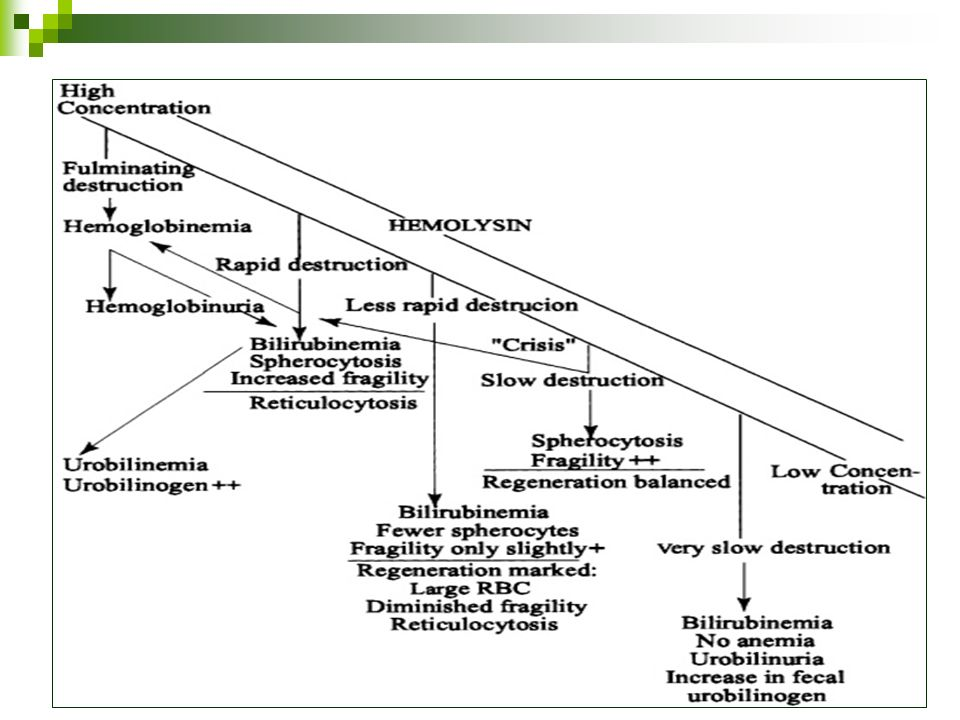 Esferocitosis hereditaria Patogénesis Pérdida de área de superficie Stress metabólico Eritrocito es atrapado en el bazo.
