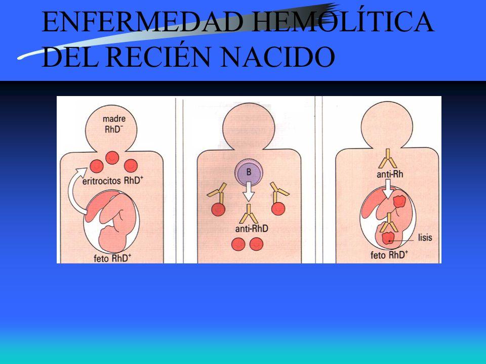ENFERMEDAD HEMOLITICA DEL RECIEN NACIDO Secuencia: GRs Rh+ del feto cruzan la placenta, la mujer produce IgG anti-D que cruza la placenta y cubren GRs del feto.