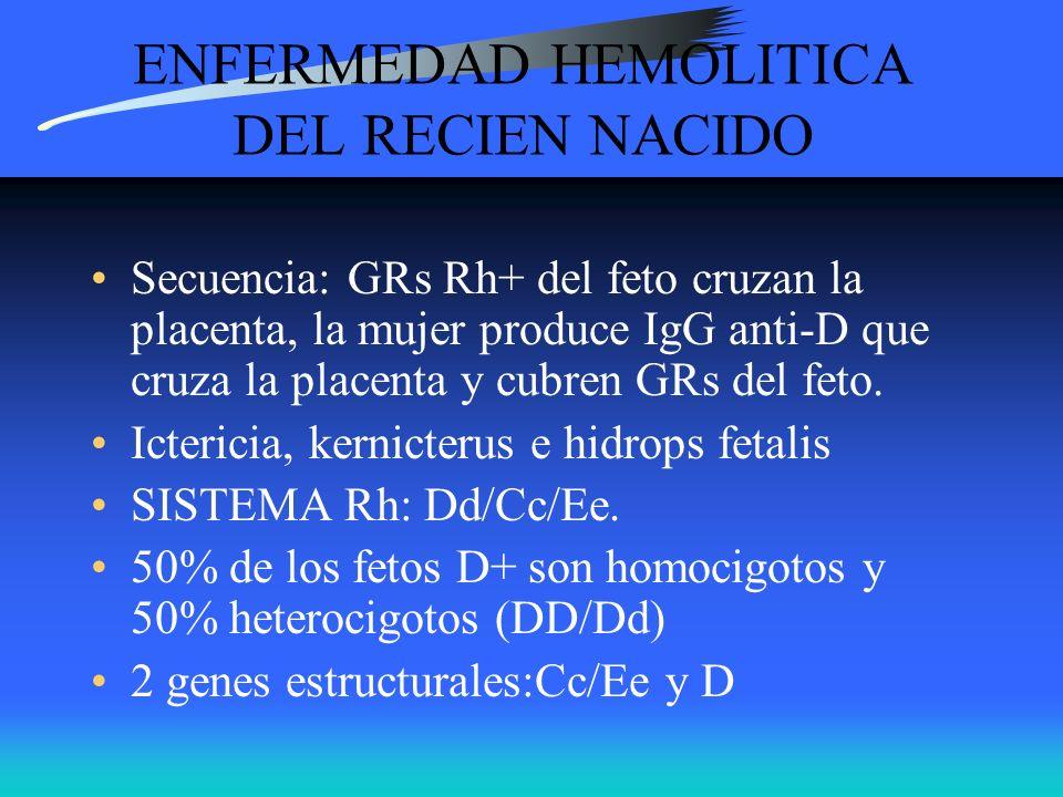 ENFERMEDAD HEMOLITICA DEL RECIEN NACIDO Secuencia: GRs Rh+ del feto cruzan la placenta, la mujer produce IgG anti-D que cruza la placenta y cubren GRs