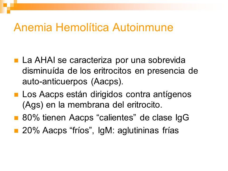 Anemia Hemolítica Autoinmune La AHAI se caracteriza por una sobrevida disminuída de los eritrocitos en presencia de auto-anticuerpos (Aacps).