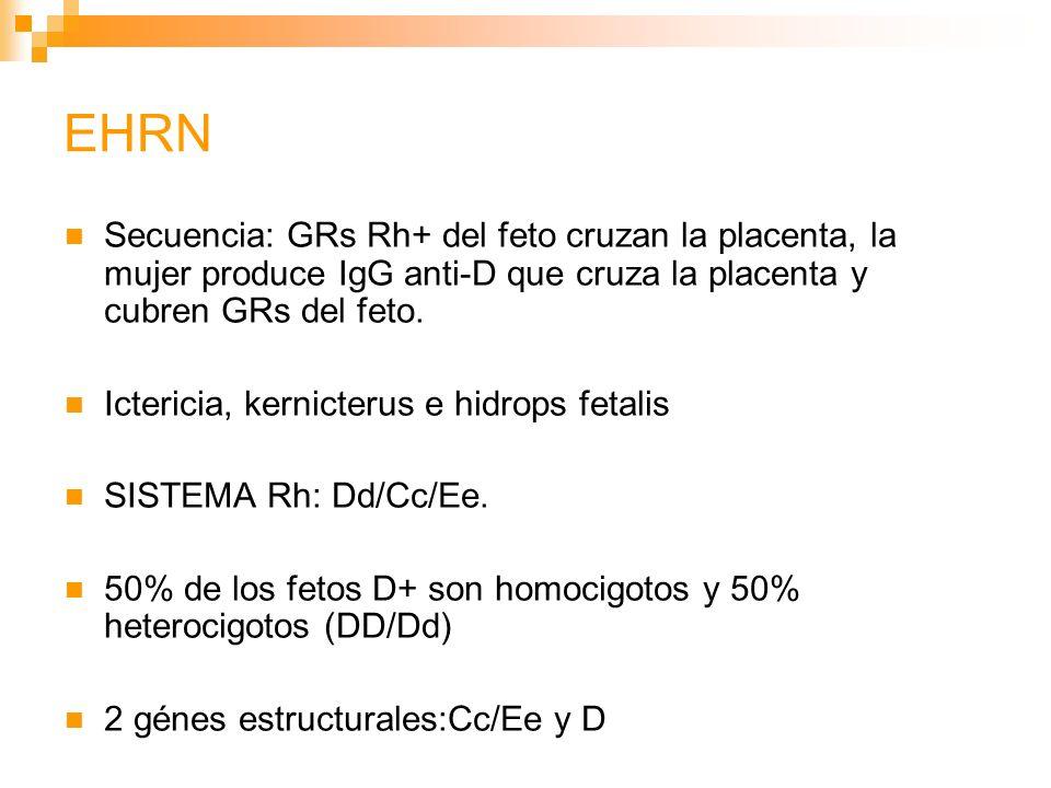 EHRN Secuencia: GRs Rh+ del feto cruzan la placenta, la mujer produce IgG anti-D que cruza la placenta y cubren GRs del feto.
