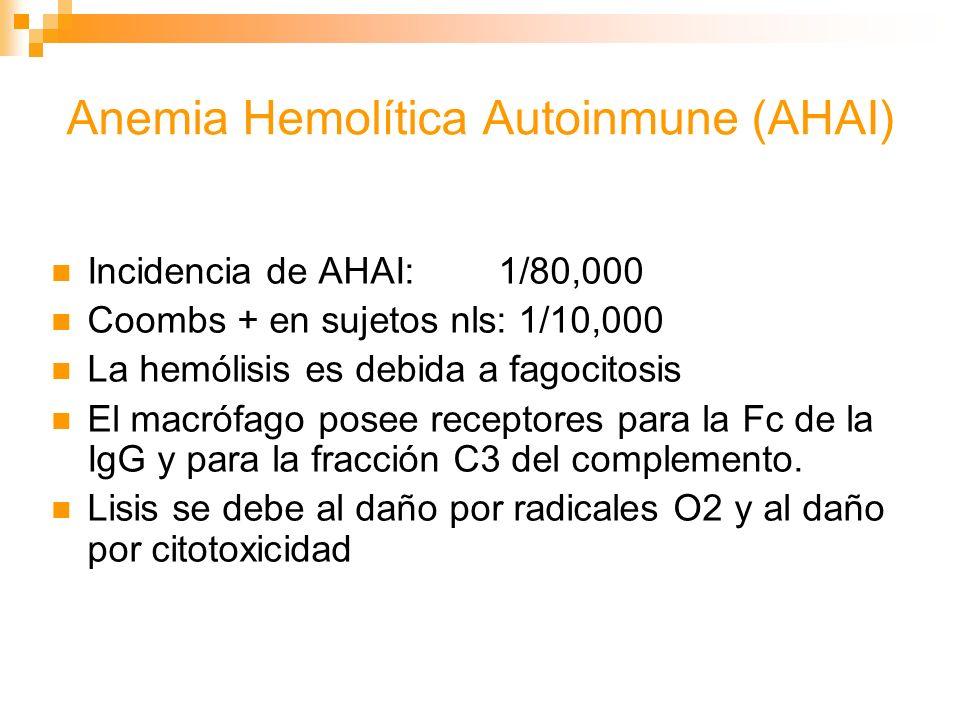Anemia Hemolítica Autoinmune (AHAI) Incidencia de AHAI: 1/80,000 Coombs + en sujetos nls: 1/10,000 La hemólisis es debida a fagocitosis El macrófago posee receptores para la Fc de la IgG y para la fracción C3 del complemento.