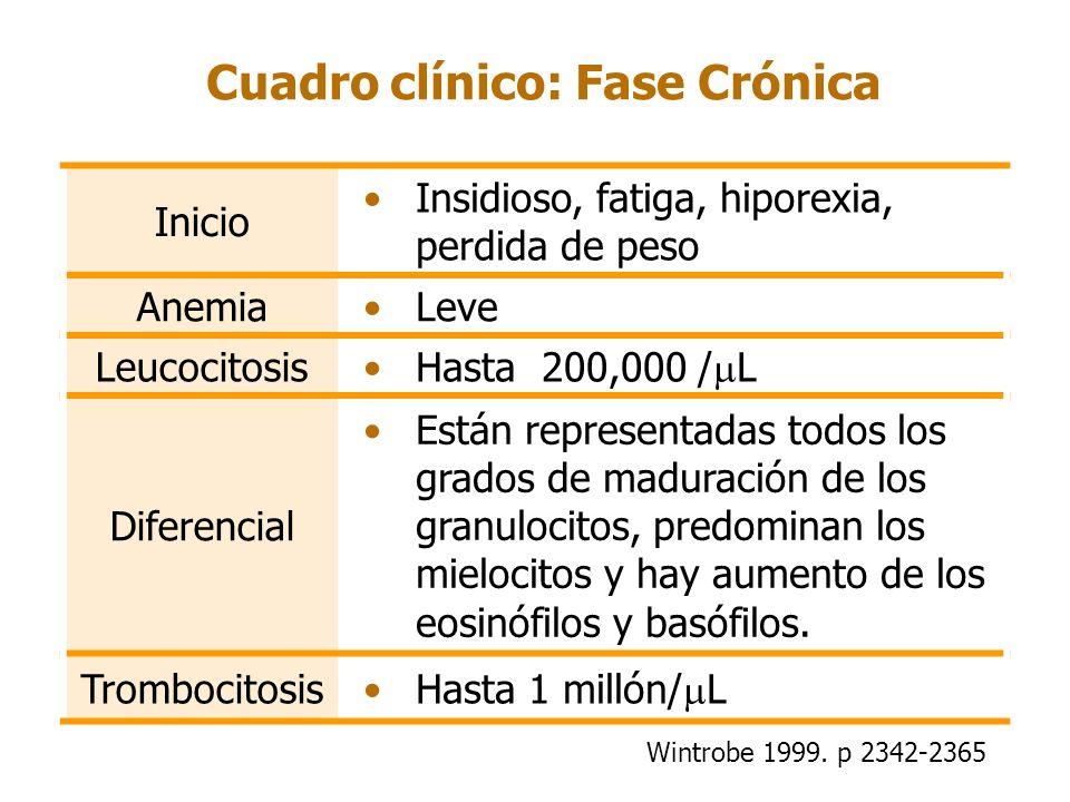 Cuadro clínico: Fase Crónica Inicio Insidioso, fatiga, hiporexia, perdida de peso AnemiaLeve Leucocitosis Hasta 200,000 / L Diferencial Están represen