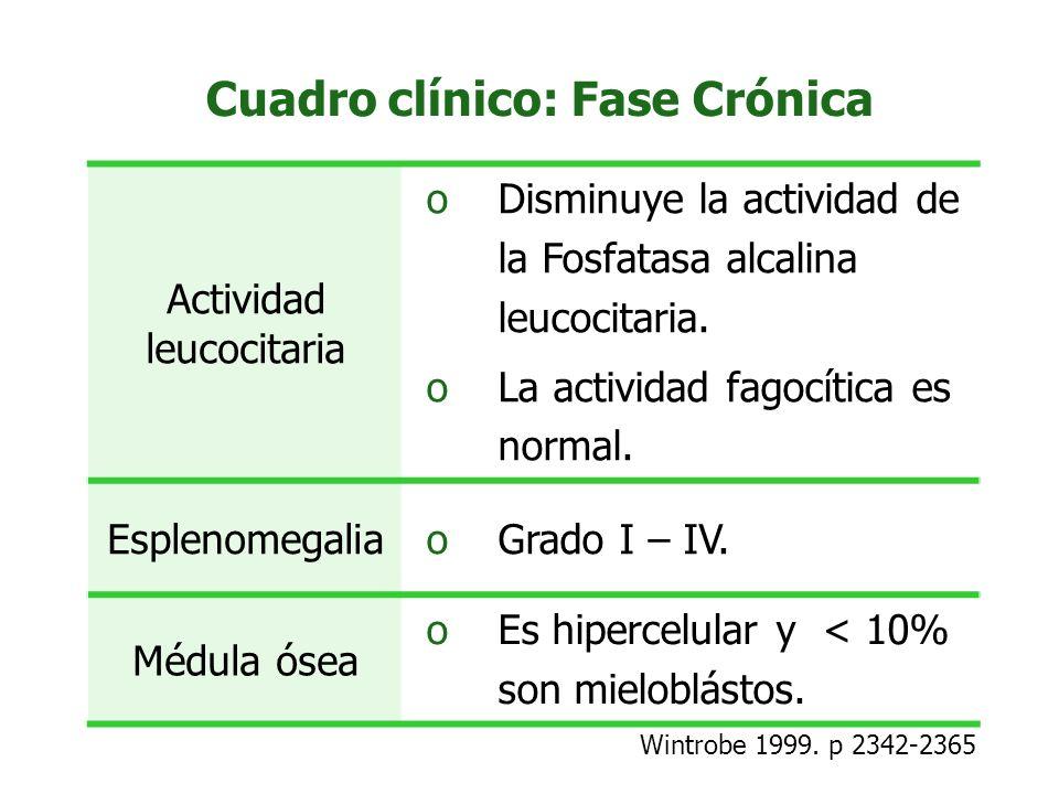 Cuadro clínico: Fase Crónica Actividad leucocitaria oDisminuye la actividad de la Fosfatasa alcalina leucocitaria. oLa actividad fagocítica es normal.