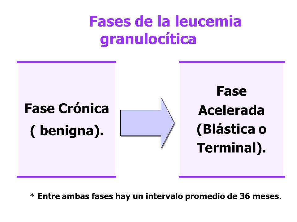 Fases de la leucemia granulocítica Fase Crónica ( benigna). Fase Acelerada (Blástica o Terminal). * Entre ambas fases hay un intervalo promedio de 36