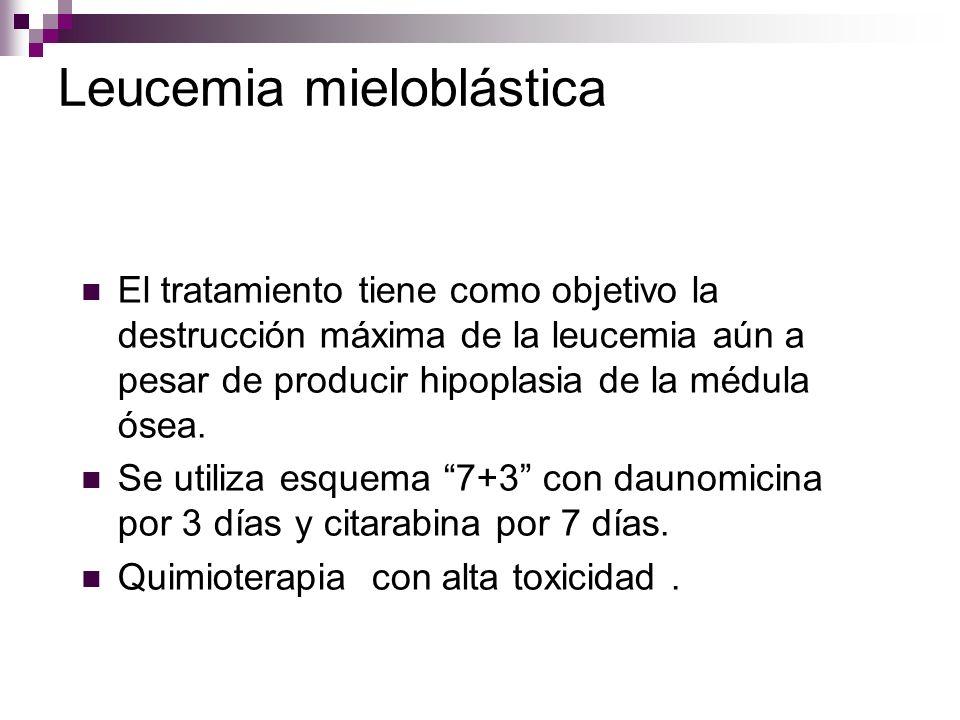 Leucemia mieloblástica El tratamiento tiene como objetivo la destrucción máxima de la leucemia aún a pesar de producir hipoplasia de la médula ósea.