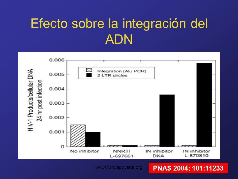 www.fundapoyarte.org Efecto sobre la integración del ADN PNAS 2004; 101:11233