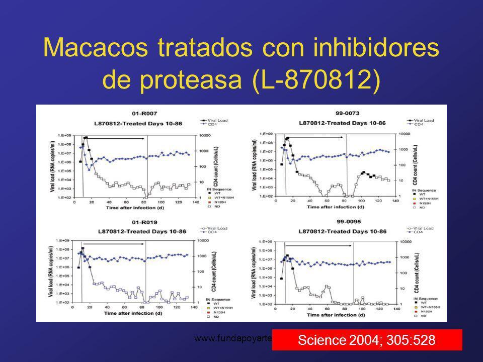 www.fundapoyarte.org Macacos tratados con inhibidores de proteasa (L-870812) Science 2004; 305:528