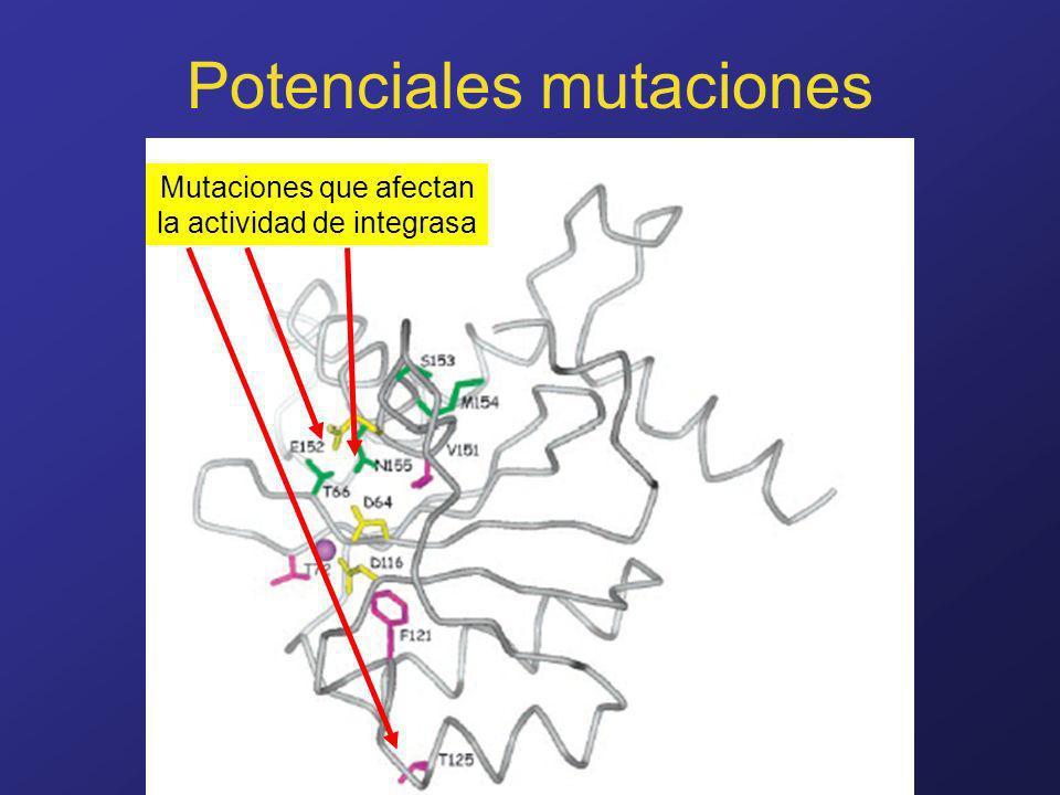 www.fundapoyarte.org Potenciales mutaciones Mutaciones que afectan la actividad de integrasa