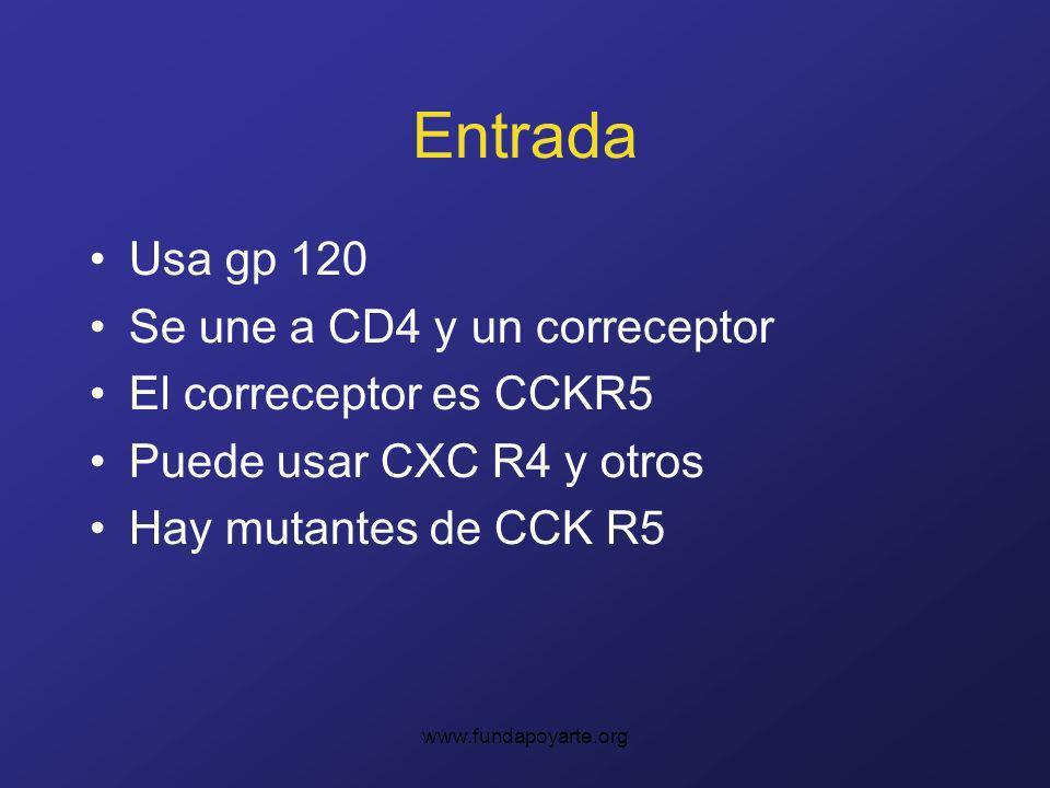 www.fundapoyarte.org Entrada Usa gp 120 Se une a CD4 y un correceptor El correceptor es CCKR5 Puede usar CXC R4 y otros Hay mutantes de CCK R5