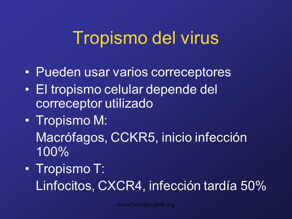 www.fundapoyarte.org Tropismo del virus Pueden usar varios correceptores El tropismo celular depende del correceptor utilizado Tropismo M: Macrófagos, CCKR5, inicio infección 100% Tropismo T: Linfocitos, CXCR4, infección tardía 50%