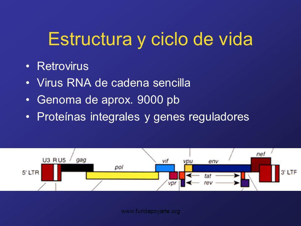 Estructura y ciclo de vida Retrovirus Virus RNA de cadena sencilla Genoma de aprox. 9000 pb Proteínas integrales y genes reguladores