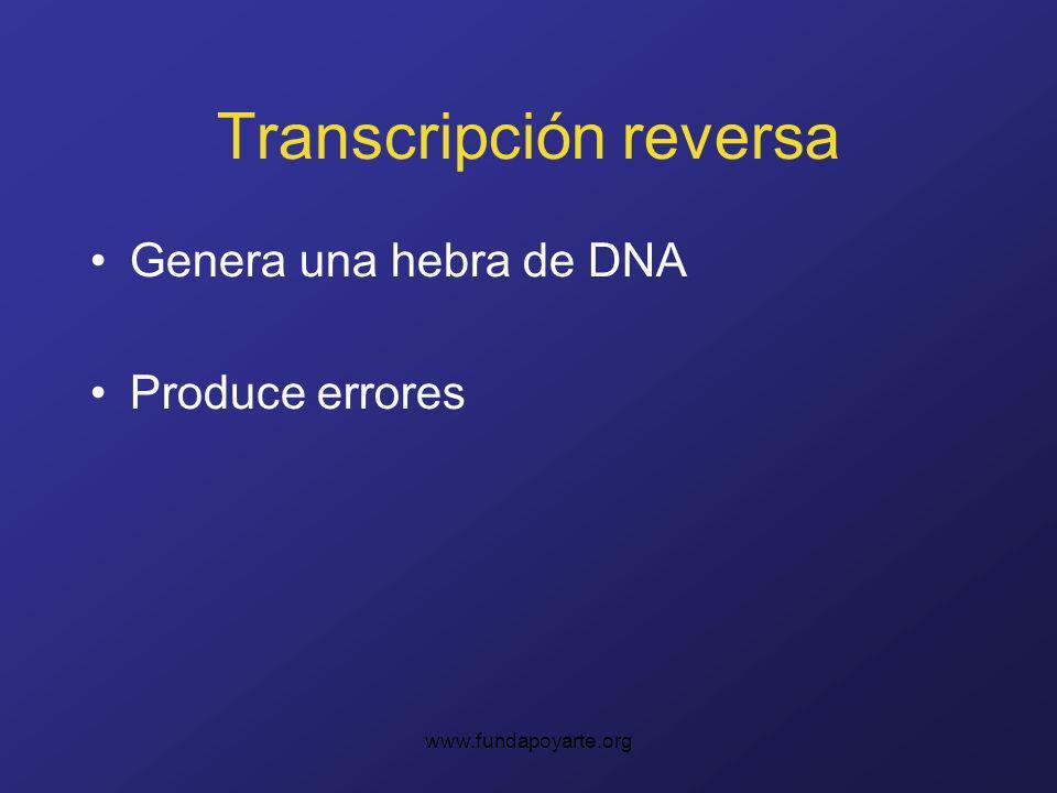 www.fundapoyarte.org Transcripción reversa Genera una hebra de DNA Produce errores