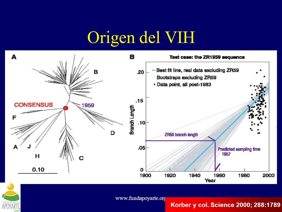 www.fundapoyarte.org 10 5 10 4 10 3 10 2 10 1 10 2 10 3 10 4 10 5 10 6 10 7 1000 500 0 Cels \ mm 3 Cultivo de plasma TCID/ml VIH RNA copiass/ml 4-8 sem hasta to 12 años 2 -3 años CD4 + Infección Seroconversión AsimtomáticoSintomáticoSIDA Muerte Ac.
