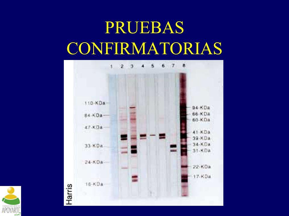 www.fundapoyarte.org PRUEBAS CONFIRMATORIAS
