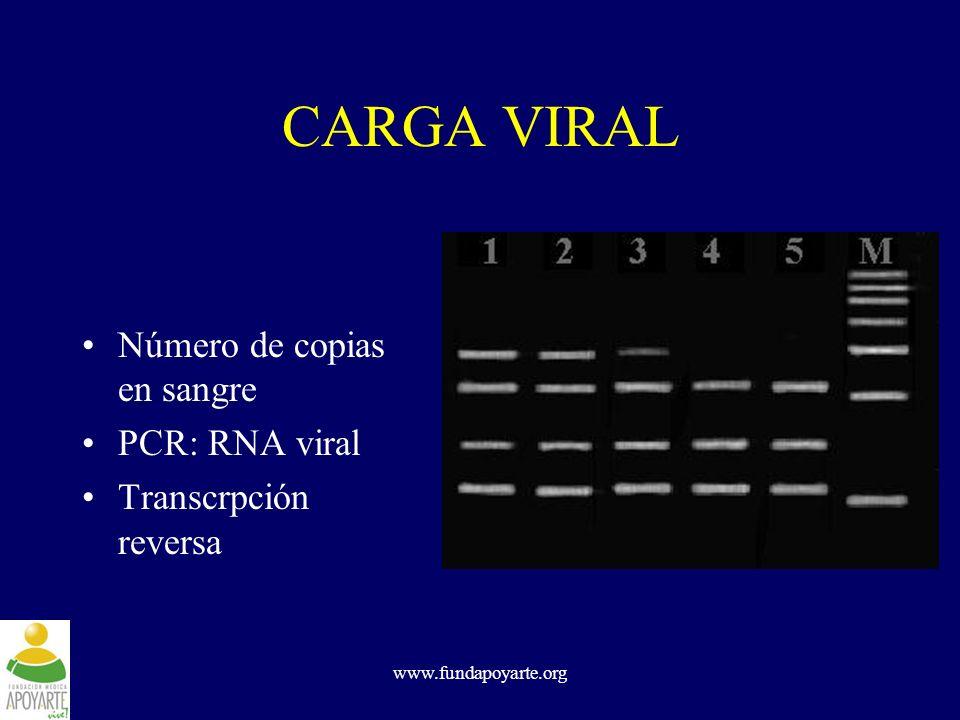 www.fundapoyarte.org CARGA VIRAL Número de copias en sangre PCR: RNA viral Transcrpción reversa