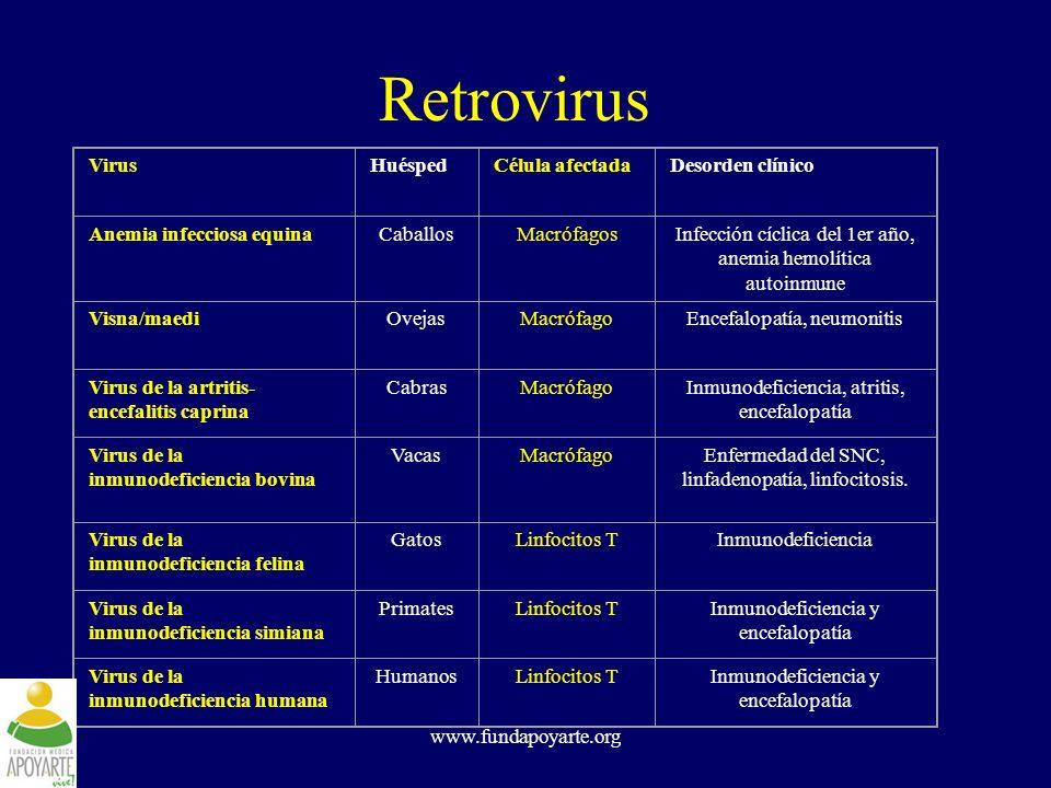 www.fundapoyarte.org Relación filogenética de lentivirus HIV - 2 SIV SMM SIV SYK HIV - 1 SIV CPZ SIV AGM VMV CAEV EIAV BIV SIV MND FIV |1% de diferencia