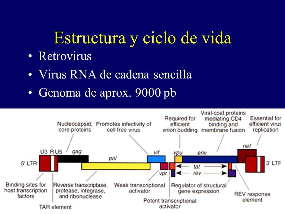 www.fundapoyarte.org Estructura y ciclo de vida Retrovirus Virus RNA de cadena sencilla Genoma de aprox. 9000 pb