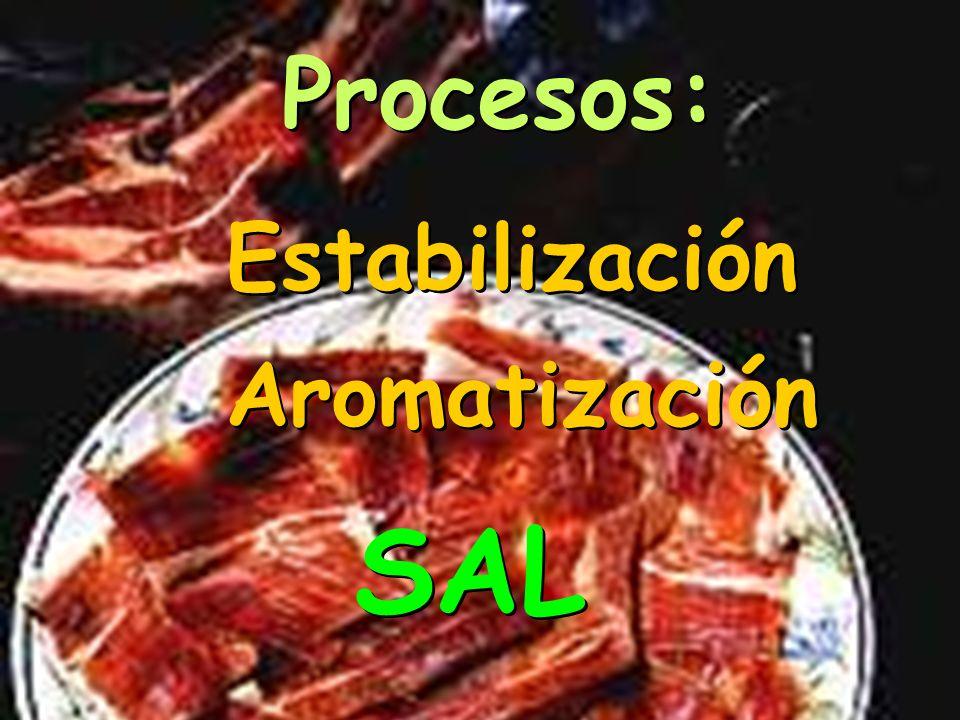 ETAPAS: Salado Post-salado Desecación Estufaje Bodega