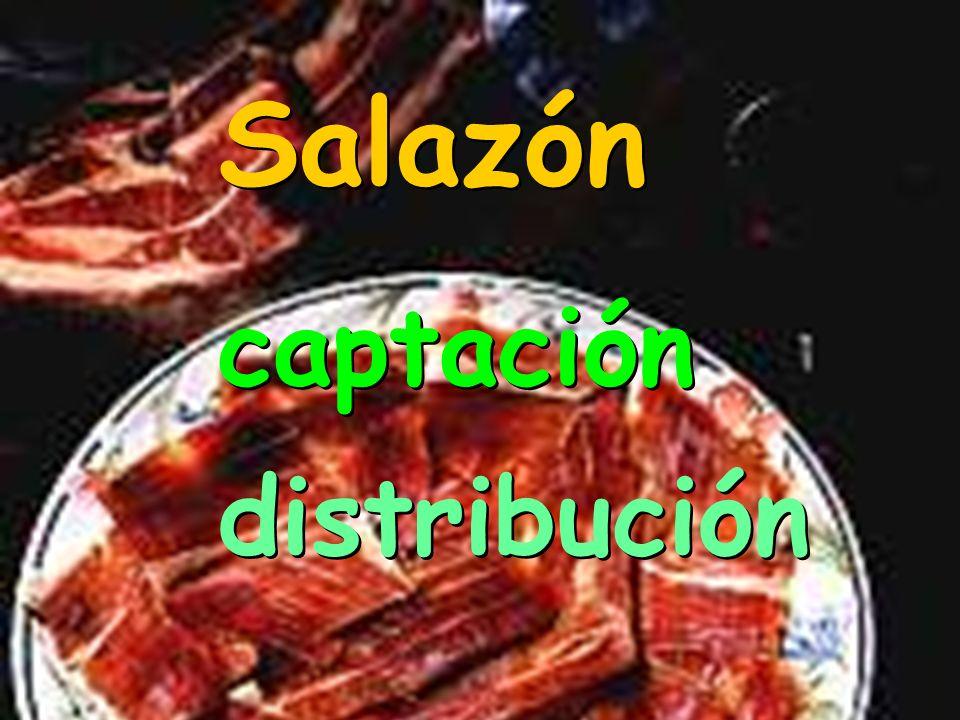 Salazón