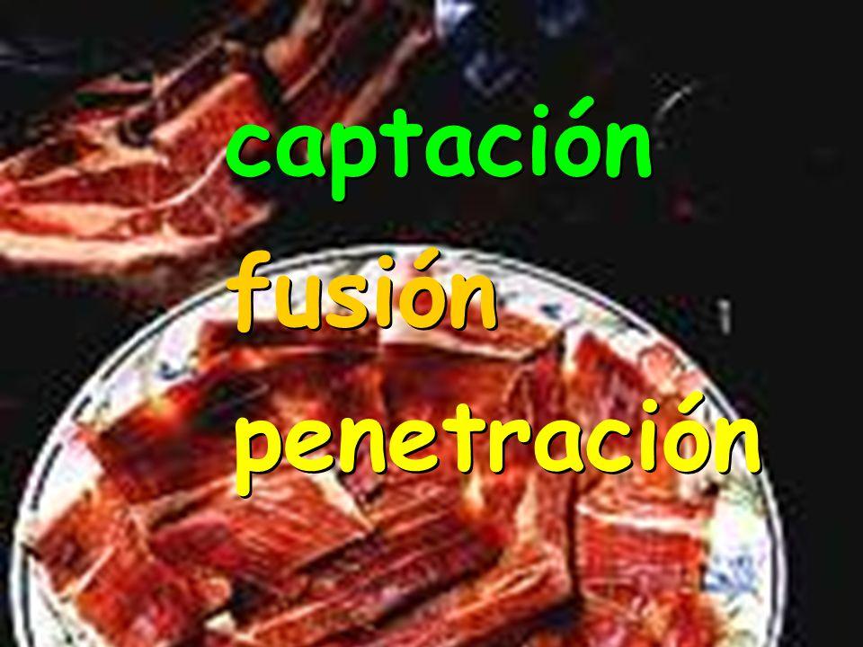 captación distribución