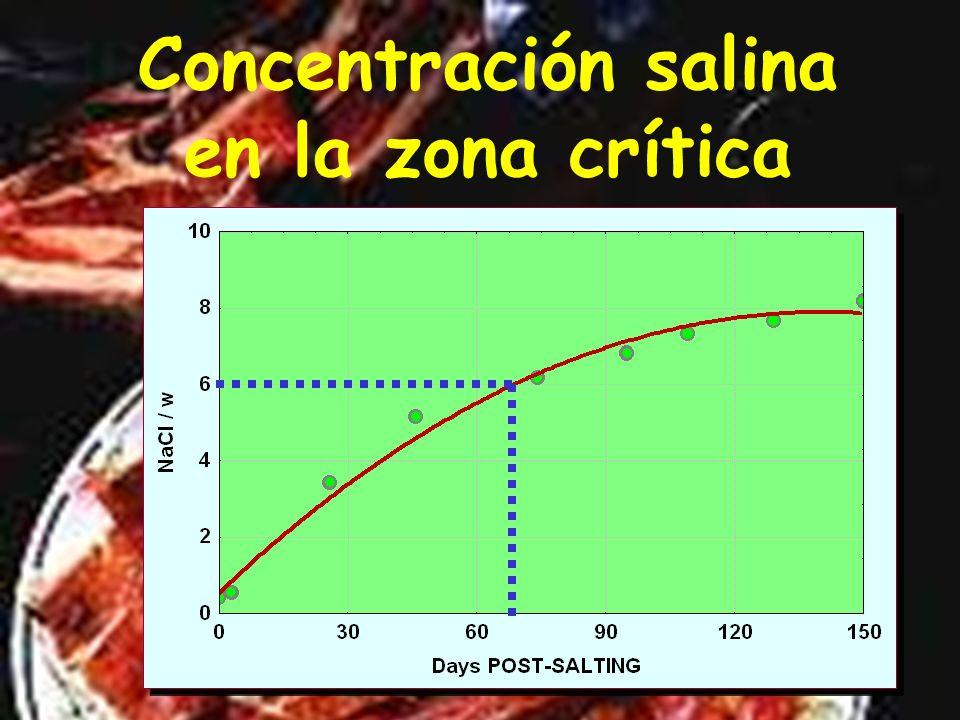 Distribución de la sal en el post-salado