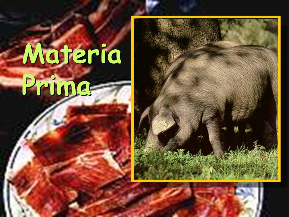 Testing Ham Cala
