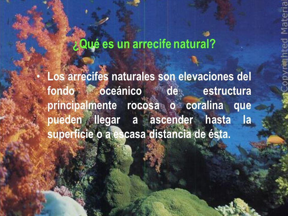 ¿Qué es un arrecife natural? Los arrecifes naturales son elevaciones del fondo oceánico de estructura principalmente rocosa o coralina que pueden lleg