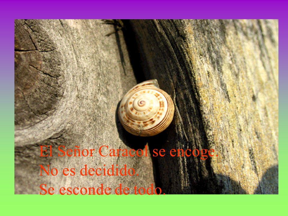 El caracol no se defiende, no lucha. Simplemente se esconde.
