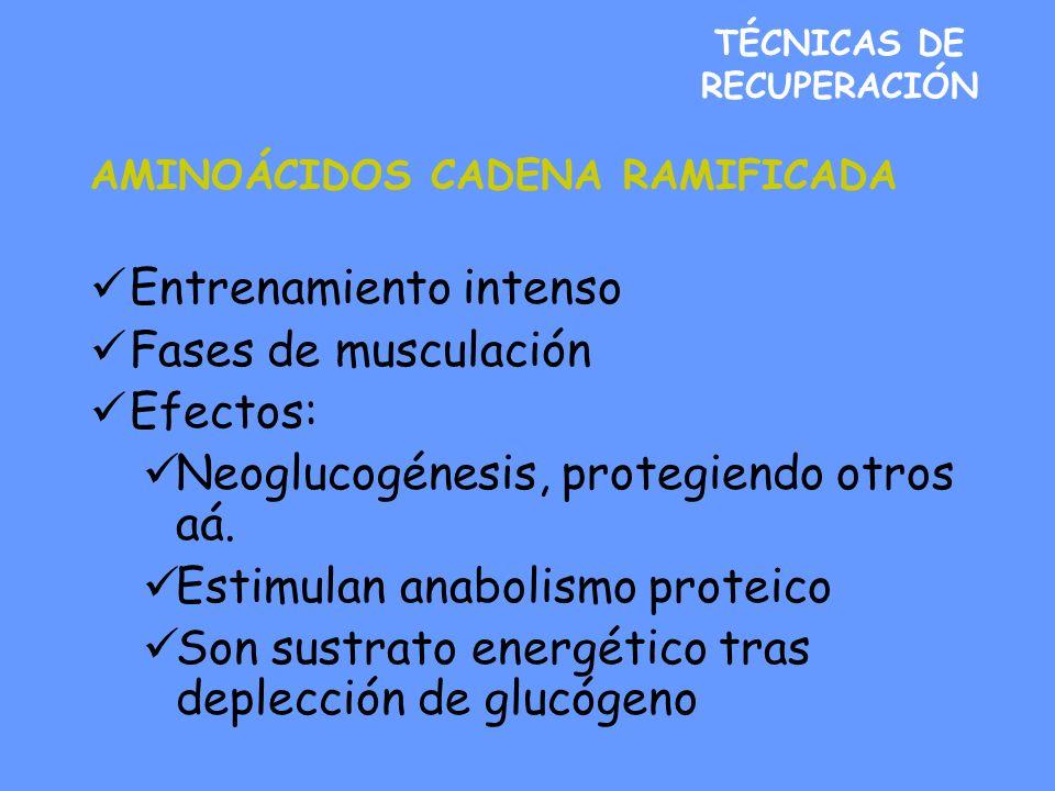TÉCNICAS DE RECUPERACIÓN AMINOÁCIDOS CADENA RAMIFICADA Entrenamiento intenso Fases de musculación Efectos: Neoglucogénesis, protegiendo otros aá. Esti