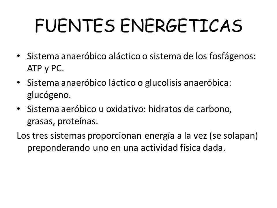 FUENTES ENERGETICAS Sistema anaeróbico aláctico o sistema de los fosfágenos: ATP y PC. Sistema anaeróbico láctico o glucolisis anaeróbica: glucógeno.