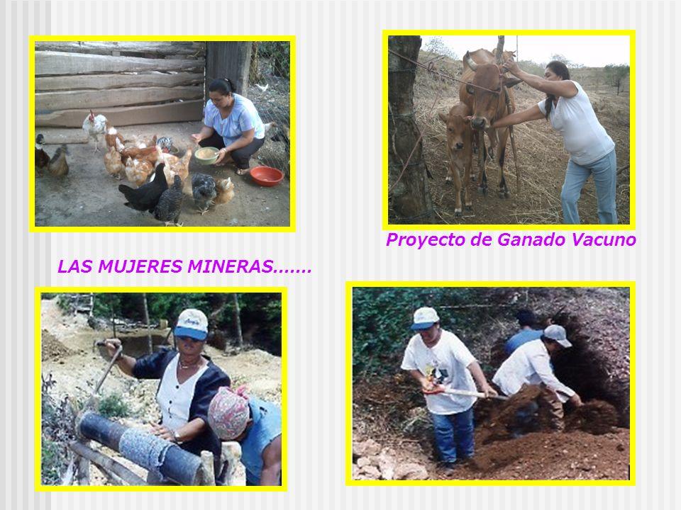 Proyecto de Ganado Vacuno LAS MUJERES MINERAS.......