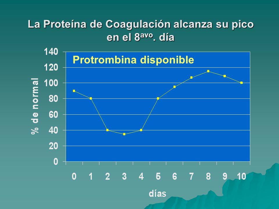 La Proteína de Coagulación alcanza su pico en el 8 avo. día Protrombina disponible