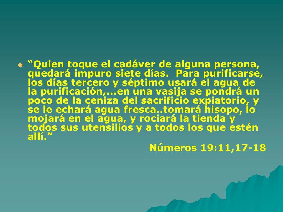 Quien toque el cadáver de alguna persona, quedará impuro siete días. Para purificarse, los días tercero y séptimo usará el agua de la purificación,...